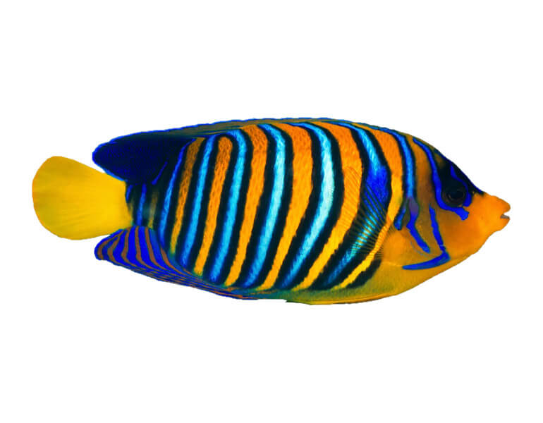 home_underwater_animals1