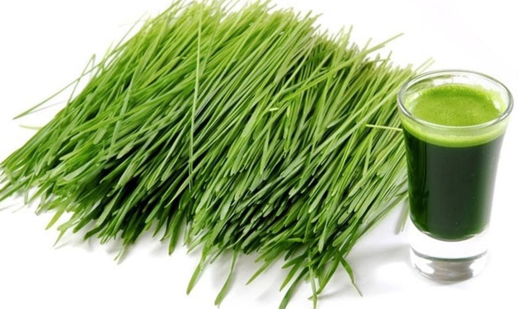 Zielony jęczmień korzystny dla zdrowia